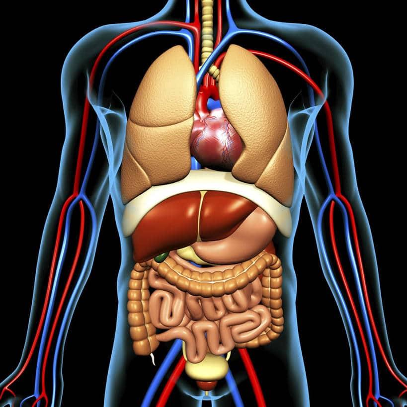 Органы-мишени при артериальной гипертензии