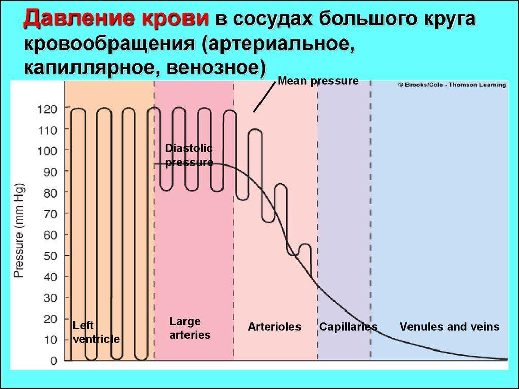 Давление крови в венах