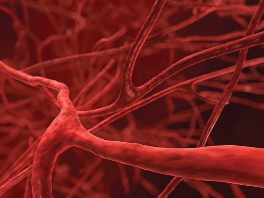 Влияние винограда на сердечно-сосудистую систему