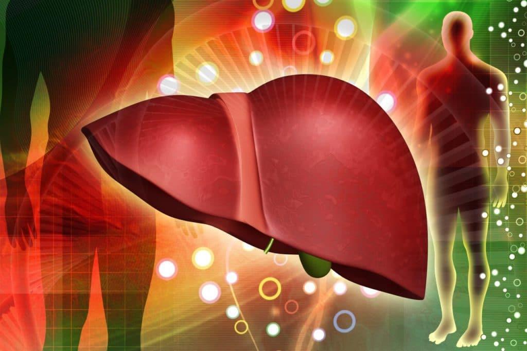 Метаболизм ингибиторов АПФ в печени