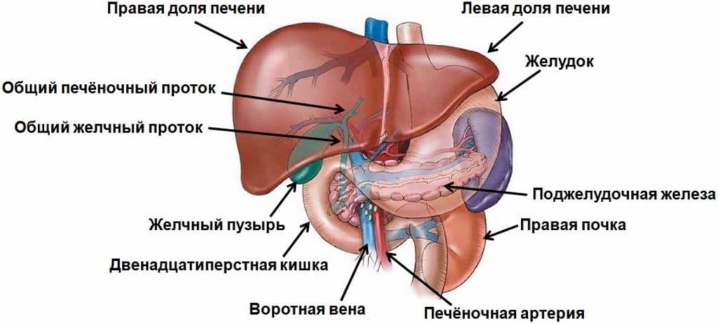 Давление крови в воротной вене при билиарной гиперттензии