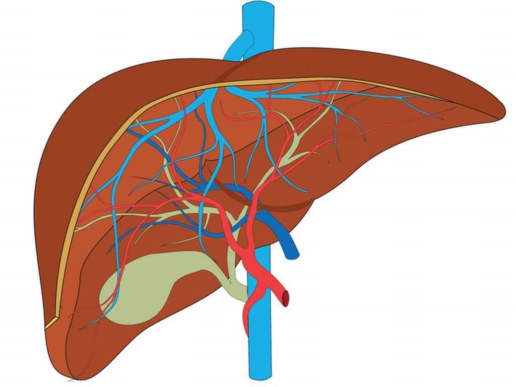 Портальная гипертензия: симптомы и принципы лечения