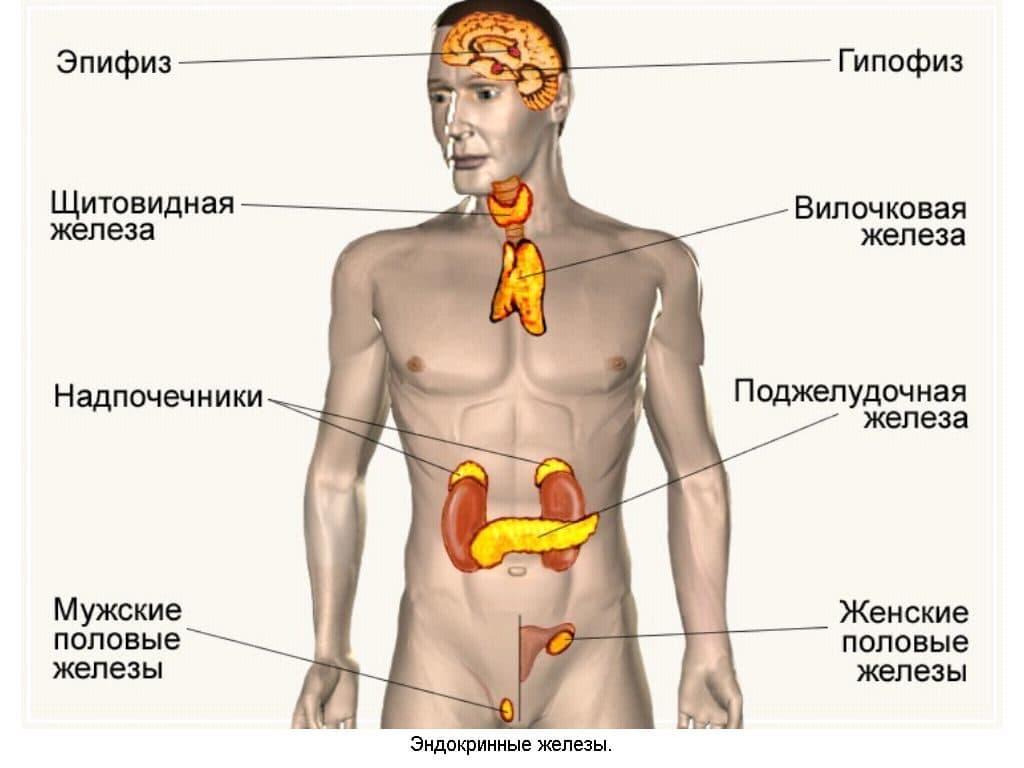 Эндокринная природа гипертензии
