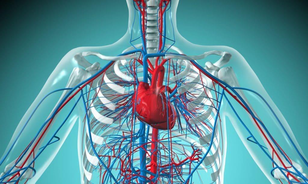 Пропранолол при заболеваниях сердечно-сосудистой системы