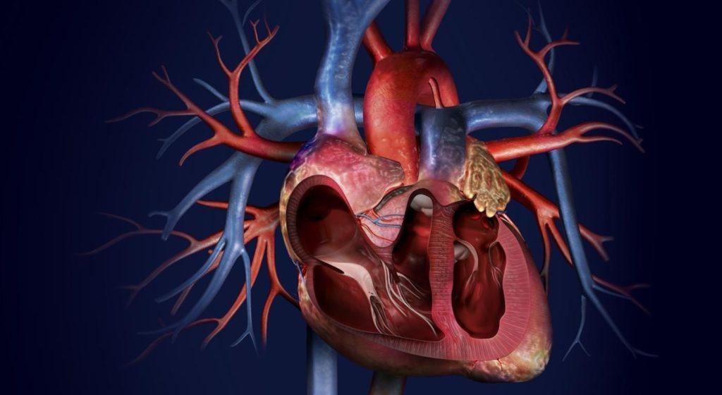 Общий артериальной ствол у ребенка: чем опасна патология и что делать?